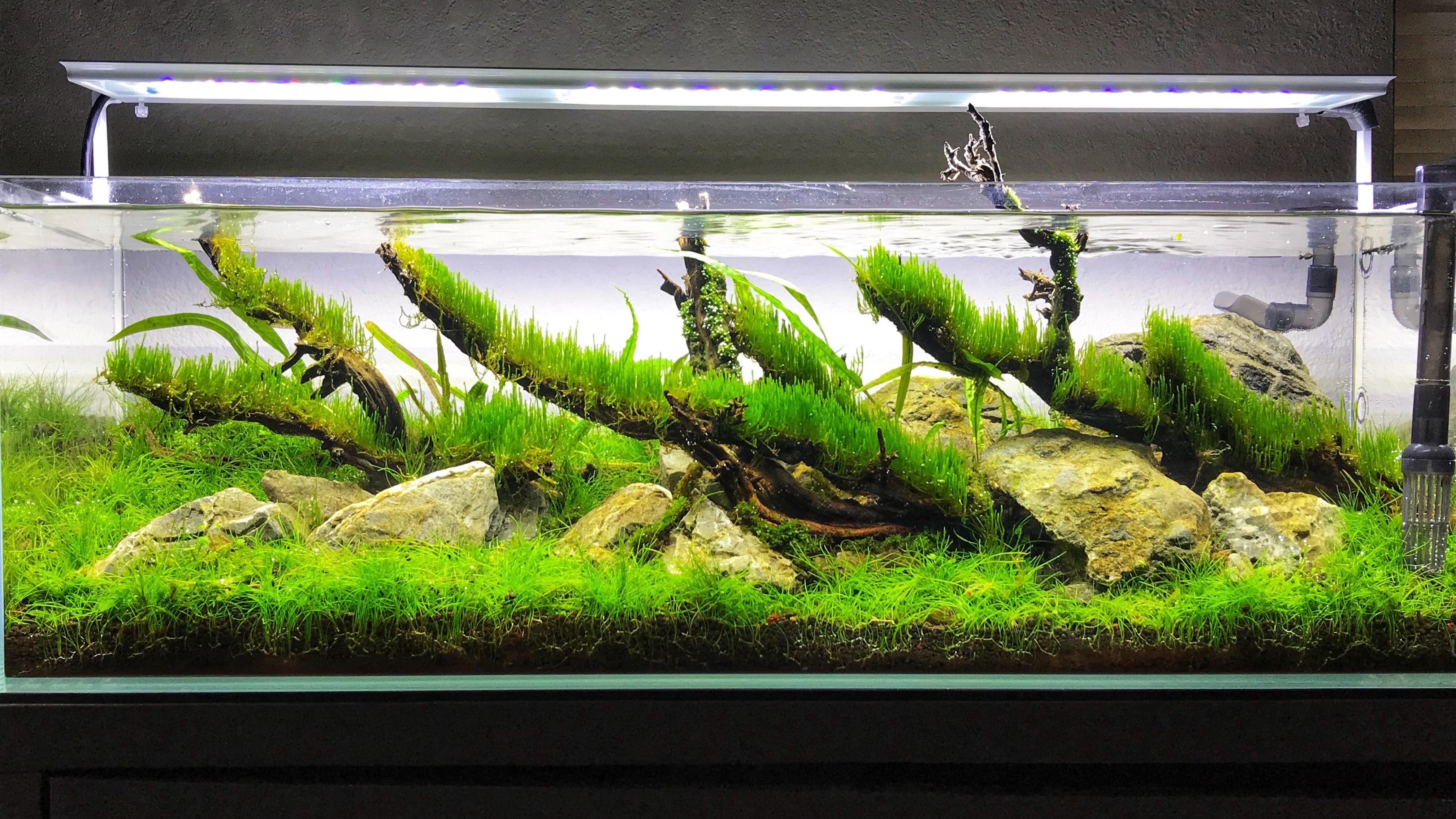 3whl5mwgtl201 4032—2268 Freshwater Aqua Scaping