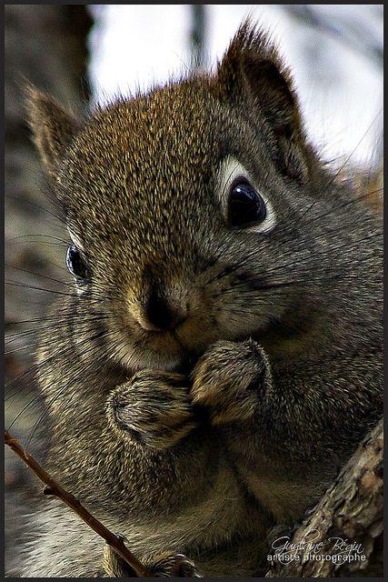 Mr. Squirrel Saving up Nuts