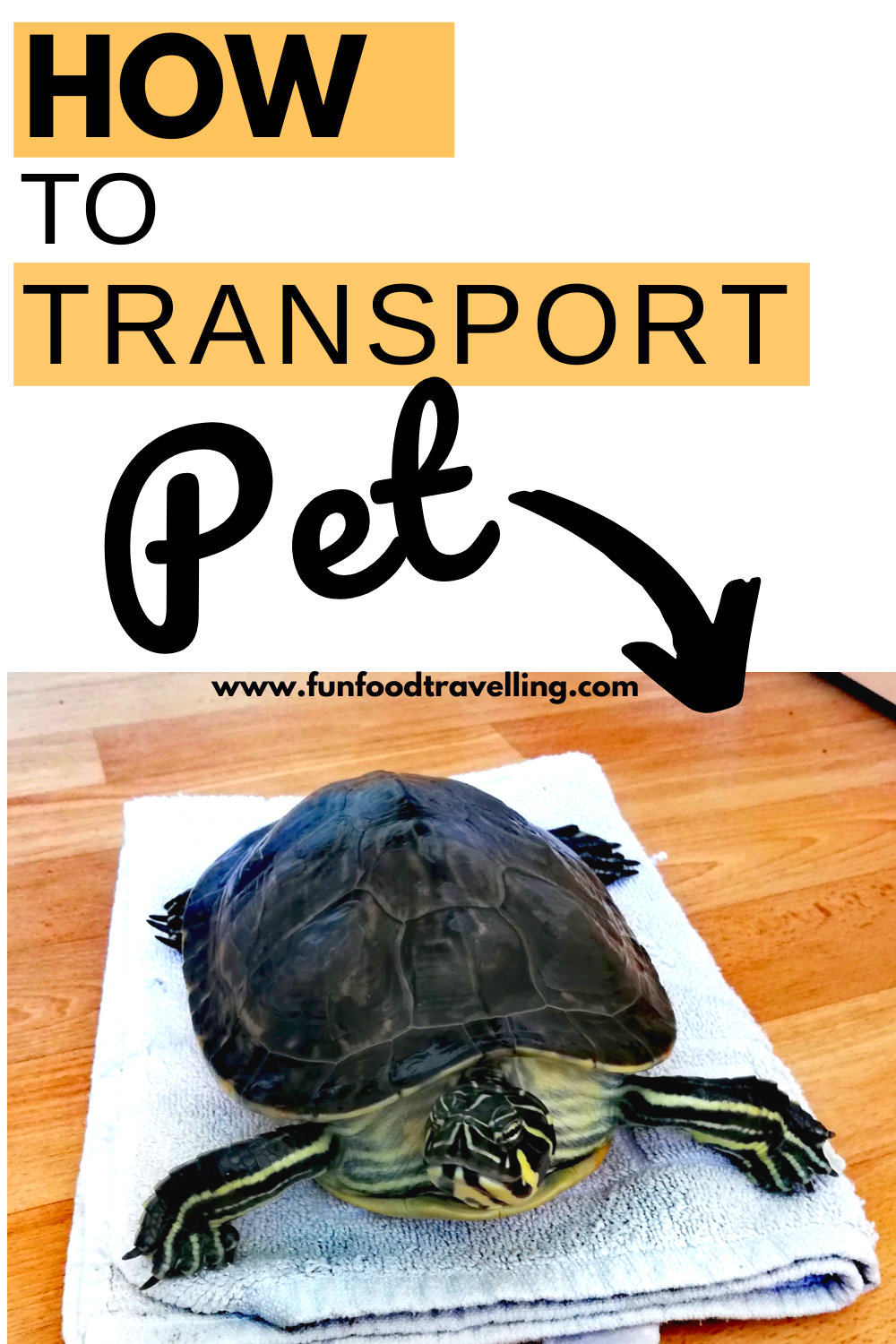 How To Organize Pet Transport Service Moving With Our Turtle Fun Food Travelling In 2020 Pet Transport Pet Transport Service Transportation