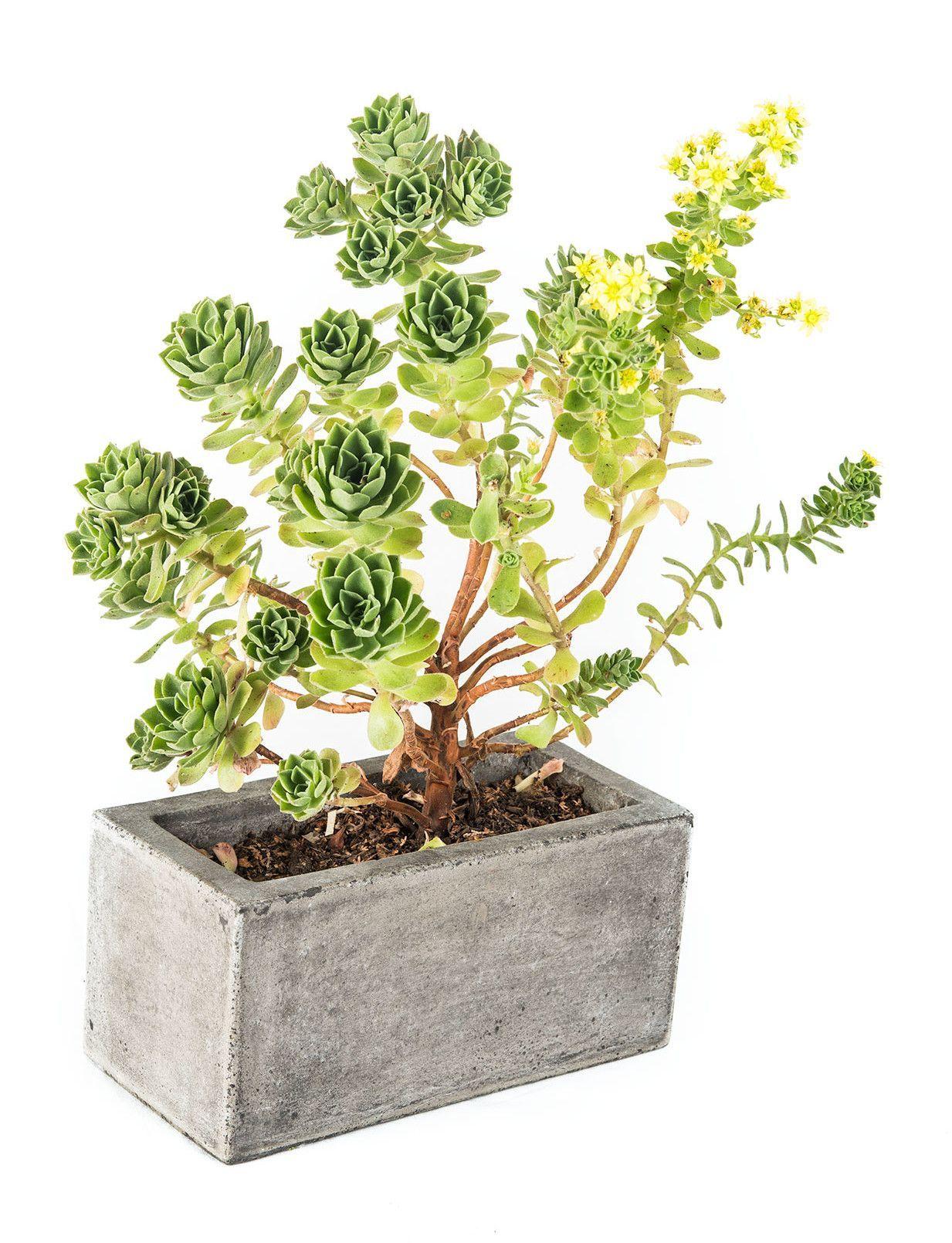 Madera Rectangle Pot Planter