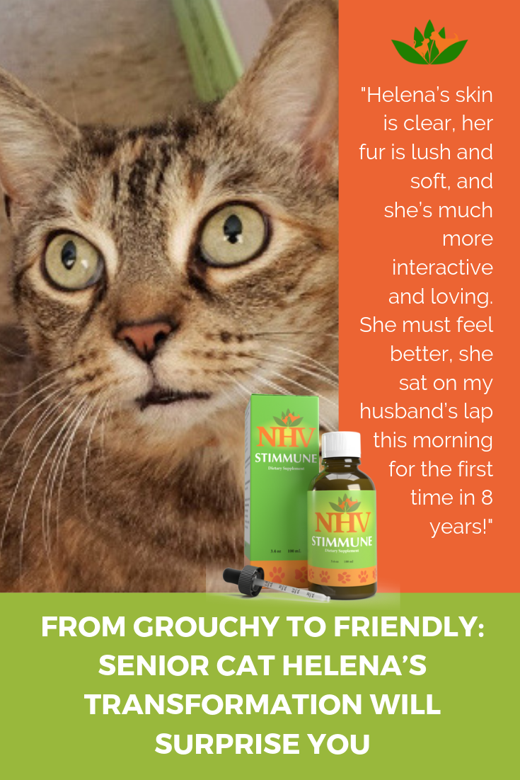 From Grouchy To Friendly Senior Cat Helena S Transformation Will Surprise You Dog Sneezing Senior Cat Itchy Dog