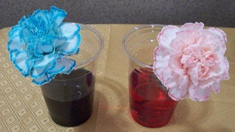 Color Changing Flowers - Pour 1 cup of water into each plastic cup ...