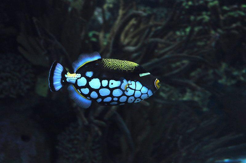 Resultado de imagen de Fish polka