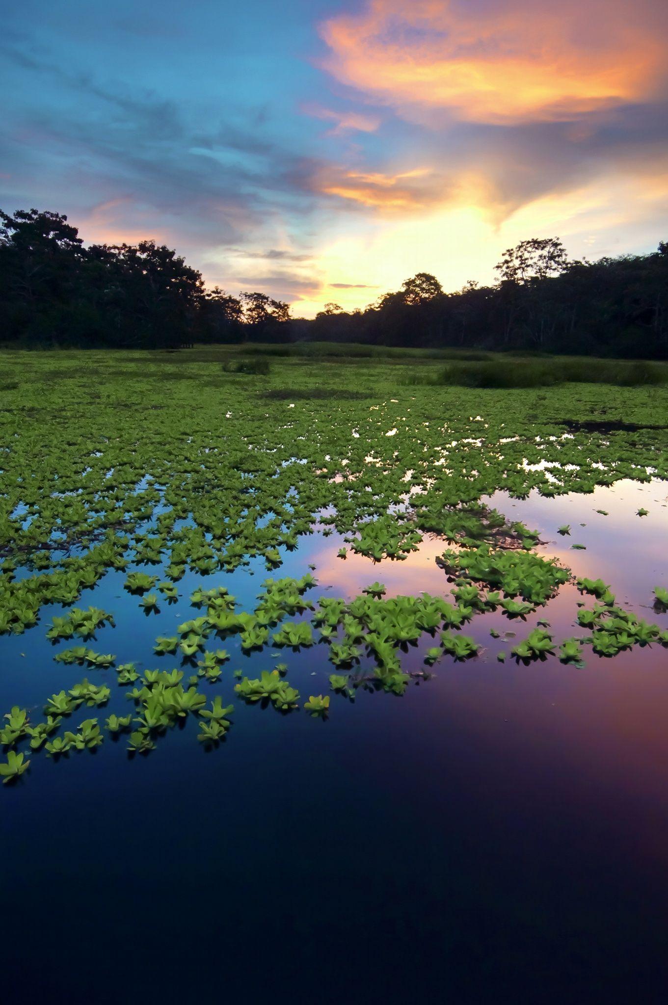 Amazon Rainforest, Peru, South America by Eduardo Huelin on 500px Amazon Rainforest, Peru, South America