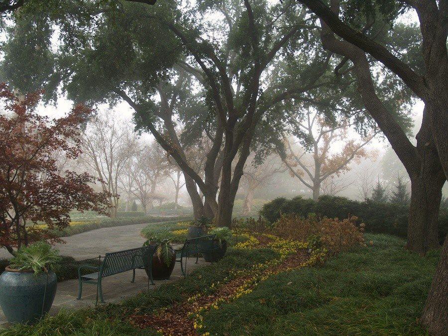 Winter Dallas Arboretum Fog Garden Dallas Texas The Dallas