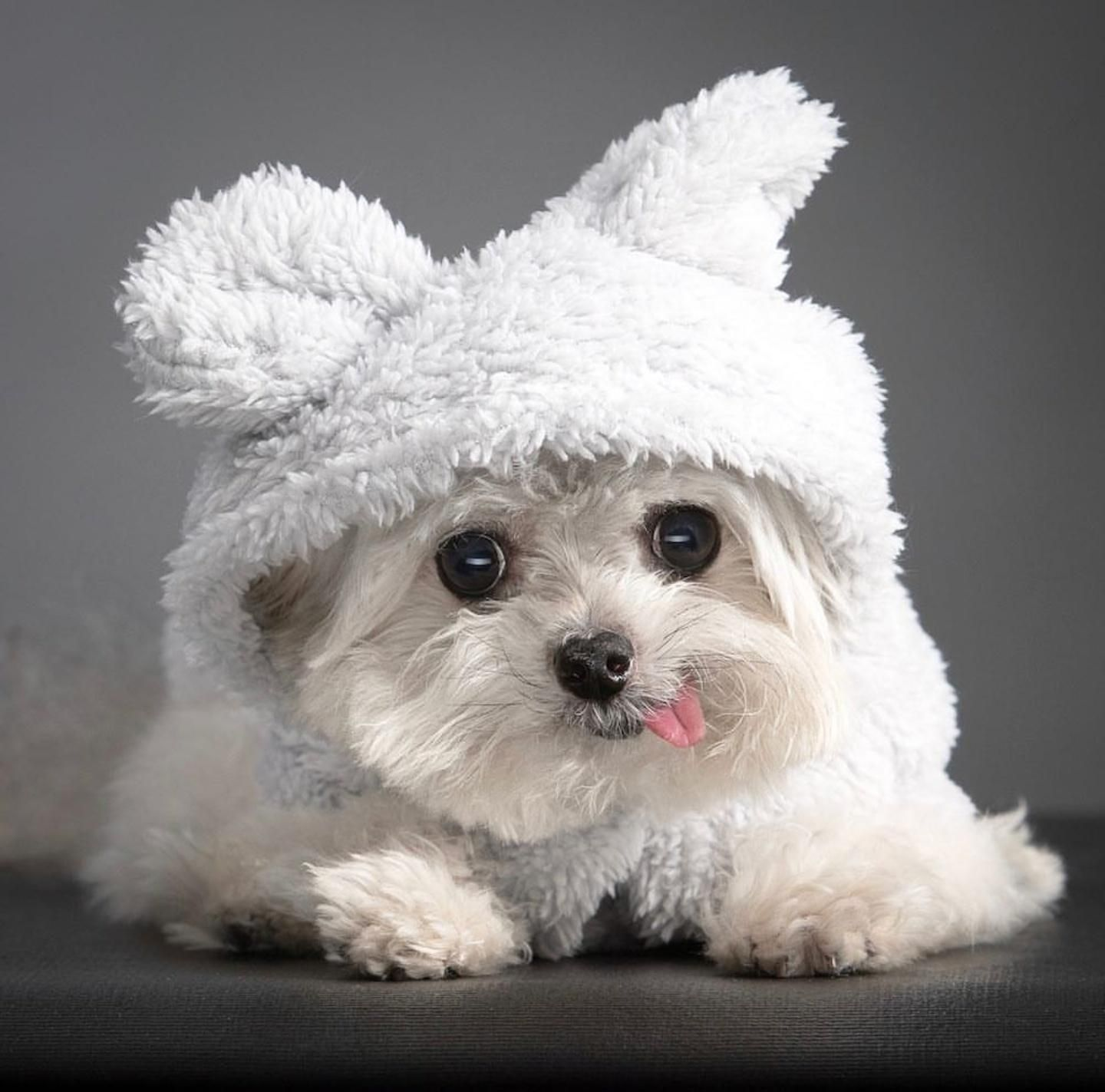 Cute animal photos baby animals pictures cute baby animals