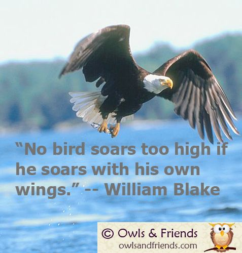 No bird soars too high. : )