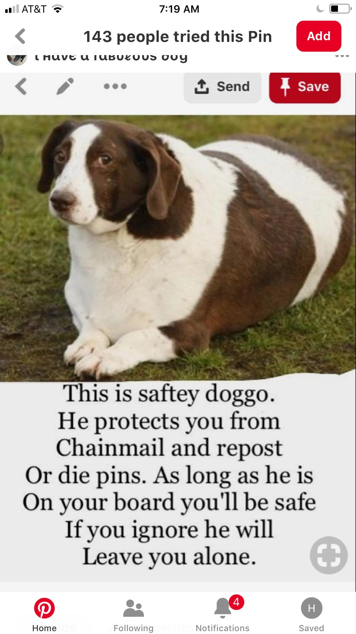 Pin by Hailey BoBailey on Awesomeness Doggo, Funny
