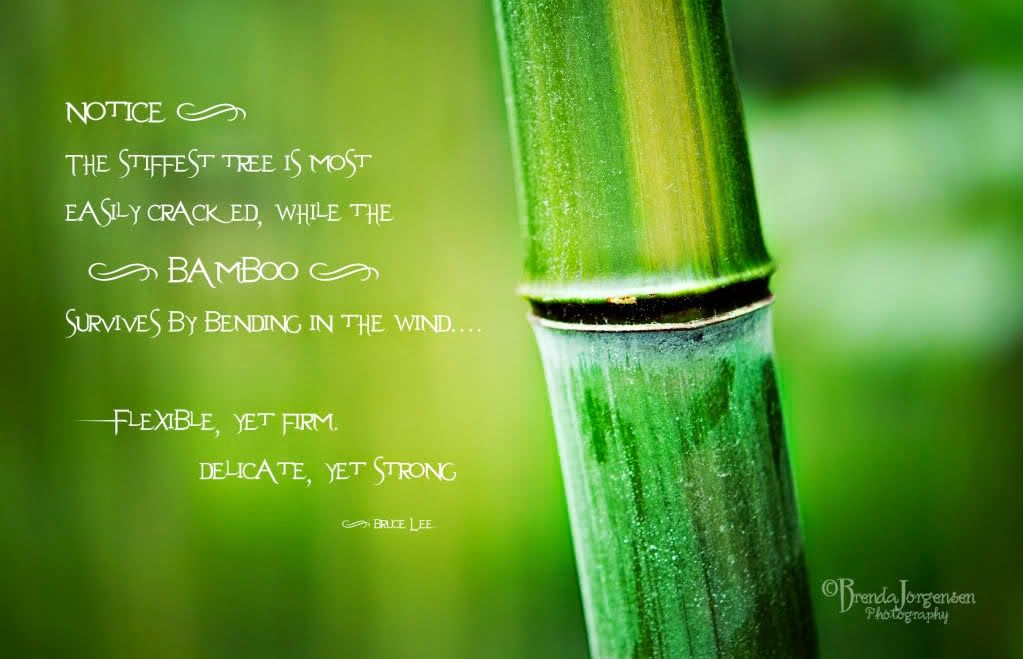 Bamboo Quotes Google Search I D O Quotes Bruce Lee Quotes