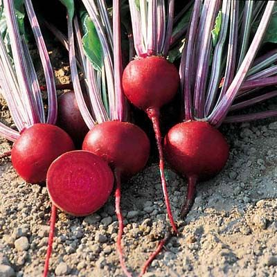 Beet Detroit Dark Red Container Gardening Vegetables Vegetable Seeds Packets Beets