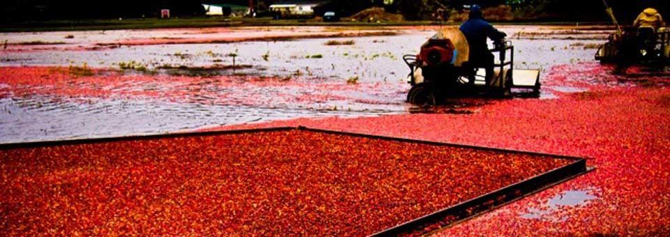 Ocean Spray Cranberry Museum Places To Visit Pinterest