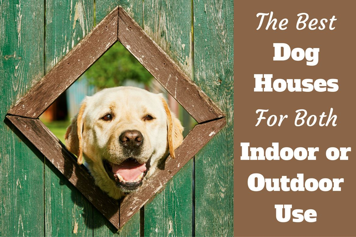 10 Best Toughest, Durable Dog Toys For Heavy Chewers | Dog houses ... | Best Dog Toys For Heavy Chewers