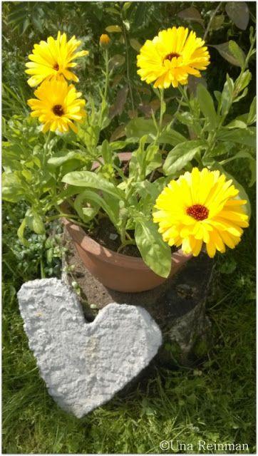 .✿ Hallatar  : Keltaisten kukkien kavalkadi