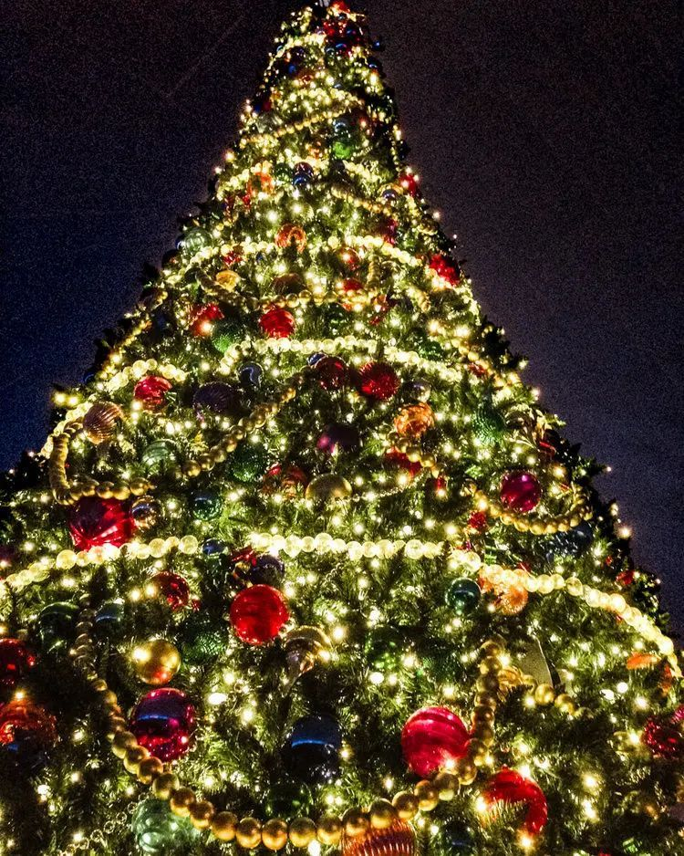 40 Things To Do In Orlando At Christmas In 2020 Orlando Christmas Christmas Travel Christmas Travel Destinations