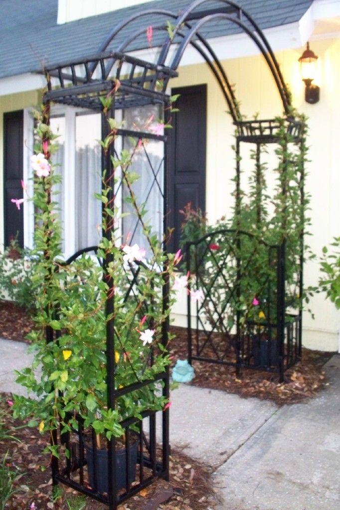 metal arbor at the entry | Garden arbor, Garden arches, Garden