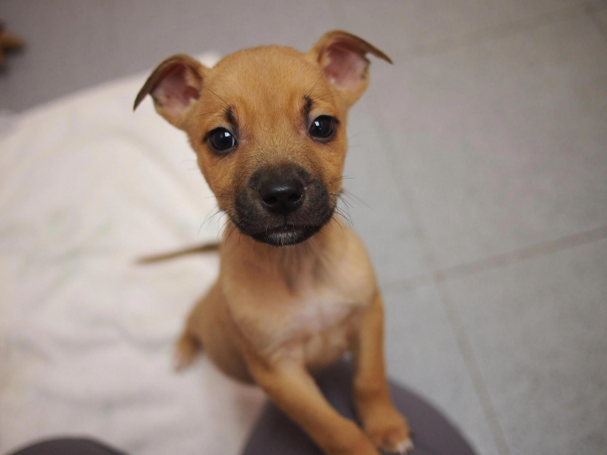 Housebreaking a Puppy in Five Easy Steps Puppies, Puppy