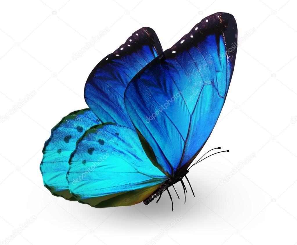 Mariposa Azul, Aislado En Blanco