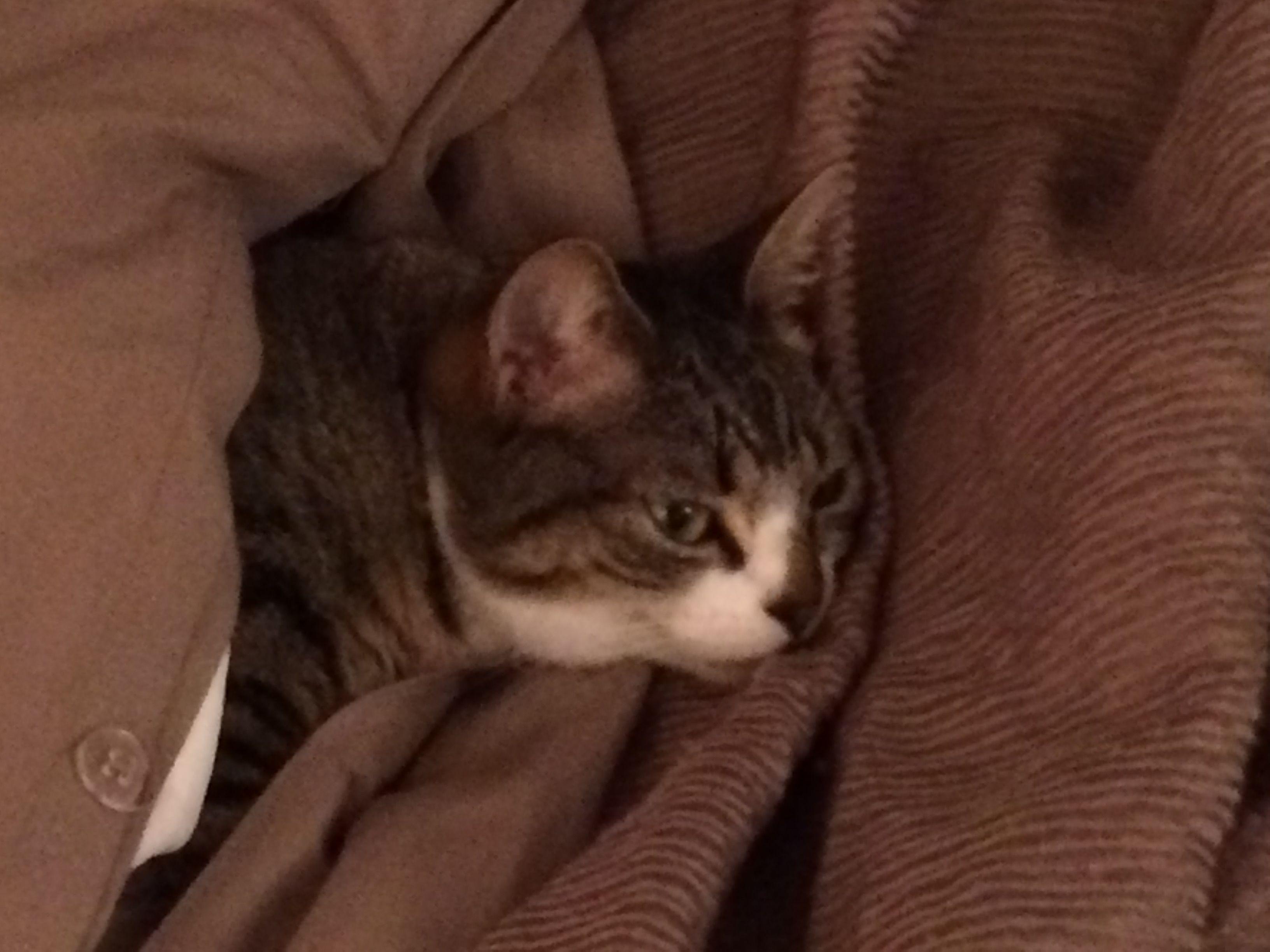 Maxcy found her way inside my duvet...