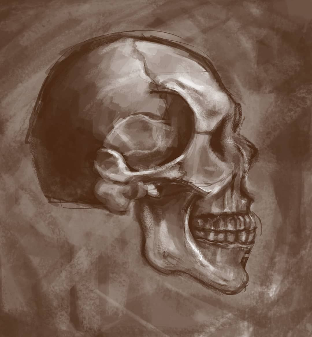 Some Digital Stu S Of Skull Side And Front View Hope