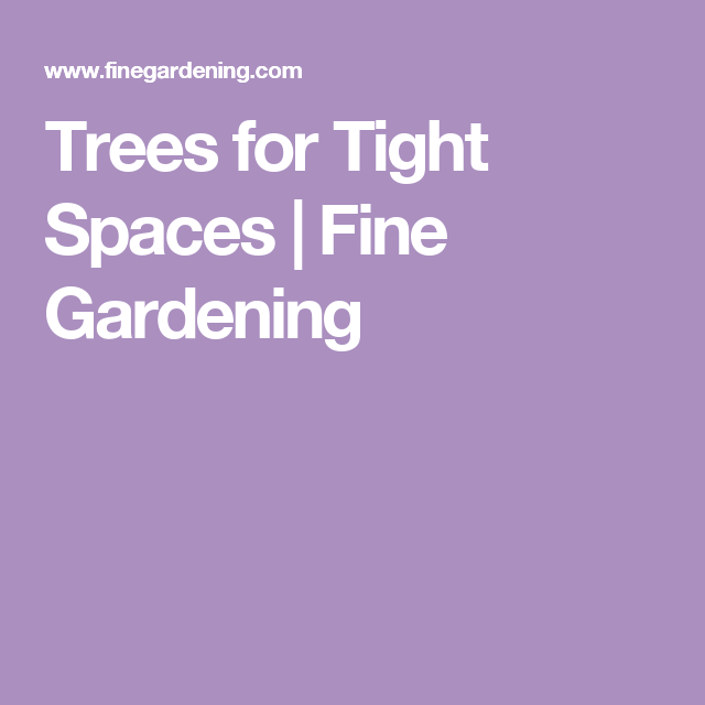 Trees For Small Spaces: Fine Gardening, Space, Garden