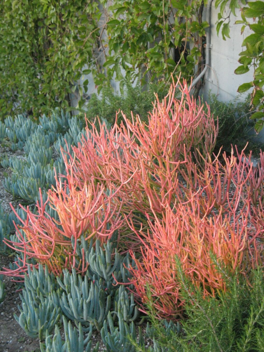 10 Trees and Plants that Signal Fall in a SoCal Garden #desertplants #desert #plants #texas