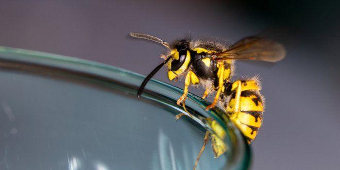 Morsure de guêpe: combien de temps pour se dégonfler?   – H.E. Beauté/Santé