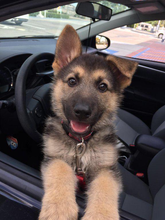 Handgefertigter Schmuck und Accessoires für Schäferhunde oder #cuteanimals