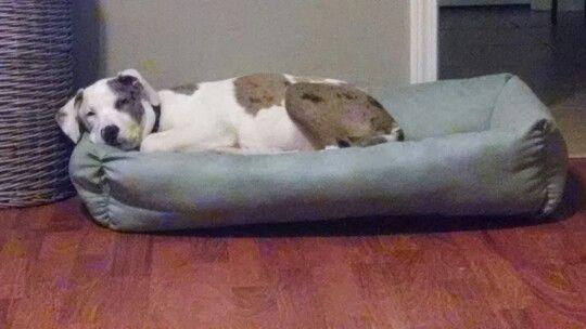 Maibel enjoying her bed ;)