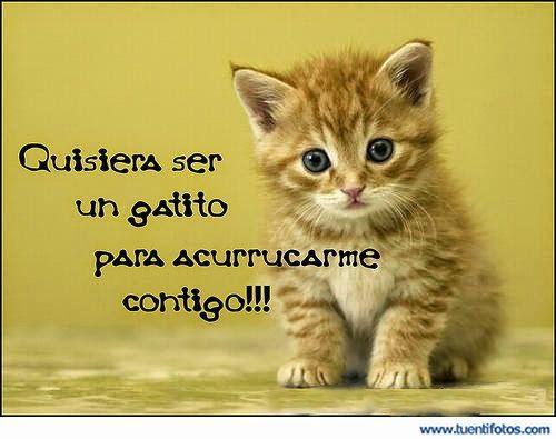 que linda palabra de el gatito