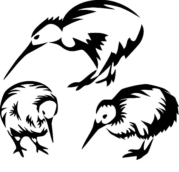 Drawing Kiwi Bird Coloring Pages Download Print Online Coloring Pages For Free Color Nimbus Bird Coloring Pages Online Coloring Pages Coloring Pages