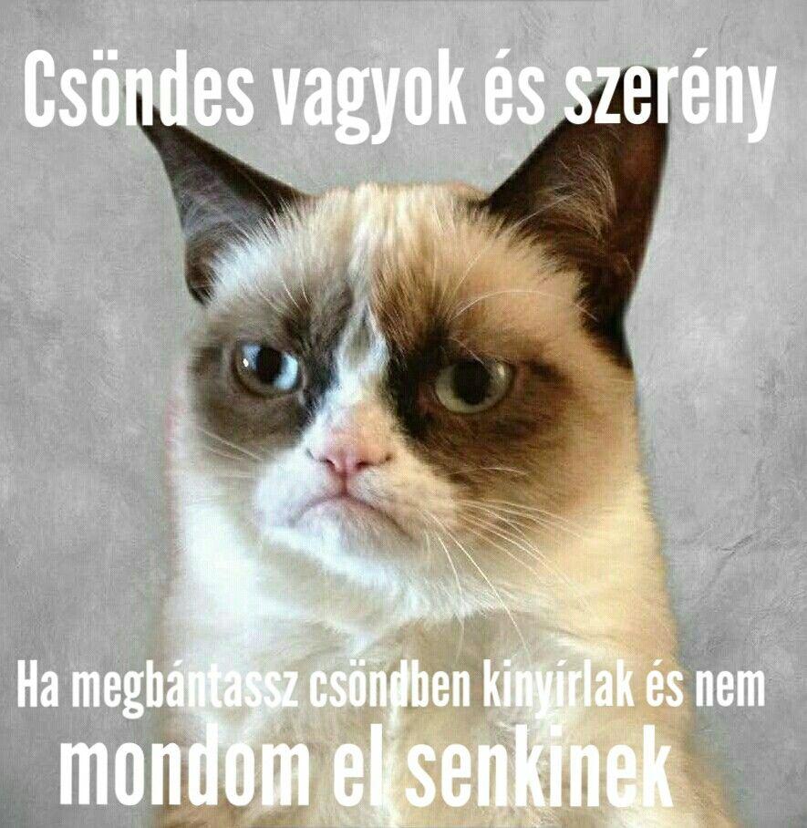 Grumpy Cat Magyar Saját Mémek Grumpy Cat Magyar