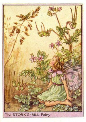 Storks-Bill Flower Fairy Print c.1950 Fairies by Cicely Mary Barker