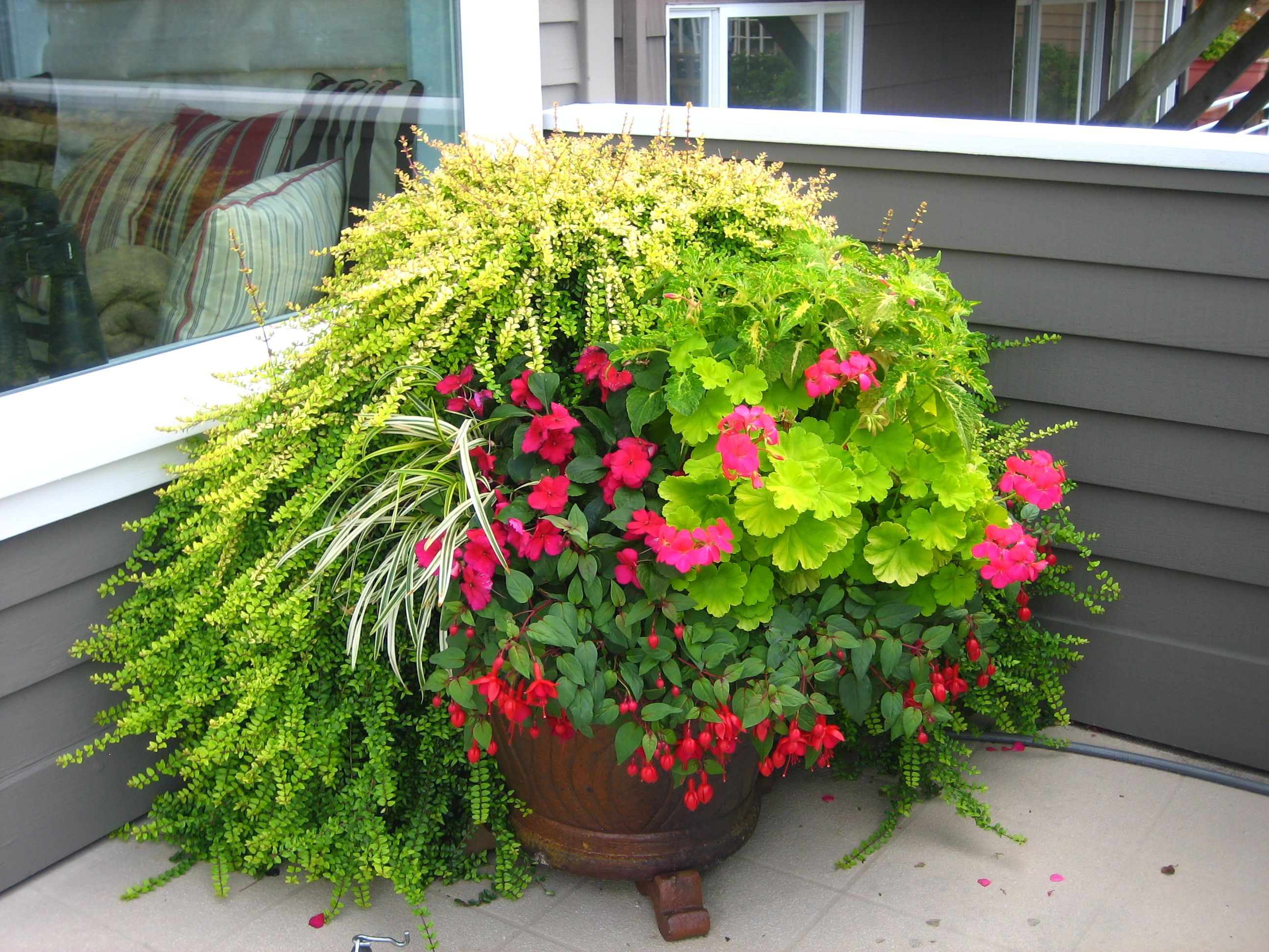 Container Flower Ideas For Partial Sun Can Include Fuschias And Geraniums Consider How Eac Container Gardening Garden Services Container Gardening Vegetables