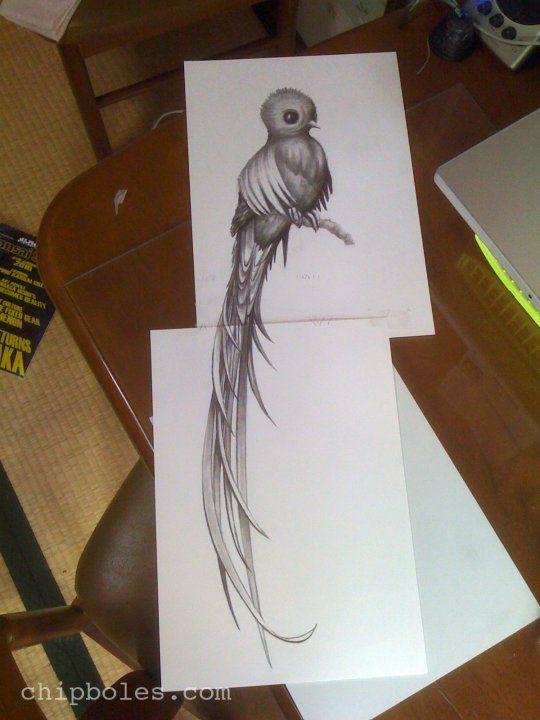 Quetzal Dibujo A Lapiz