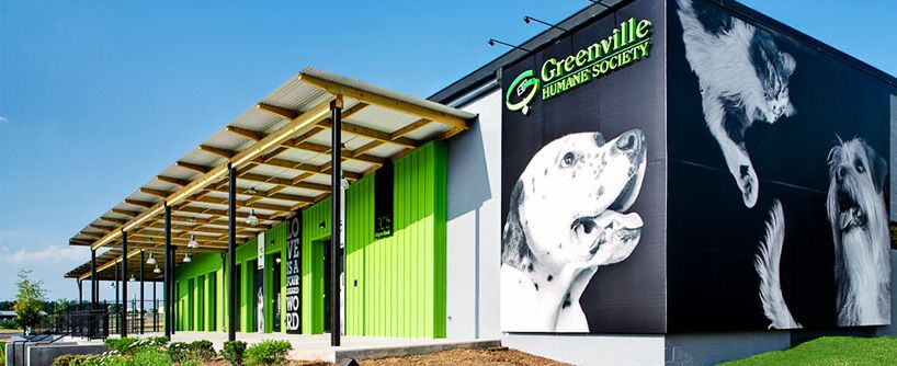 Awesome Modern Building Greenville Humane Society Humane