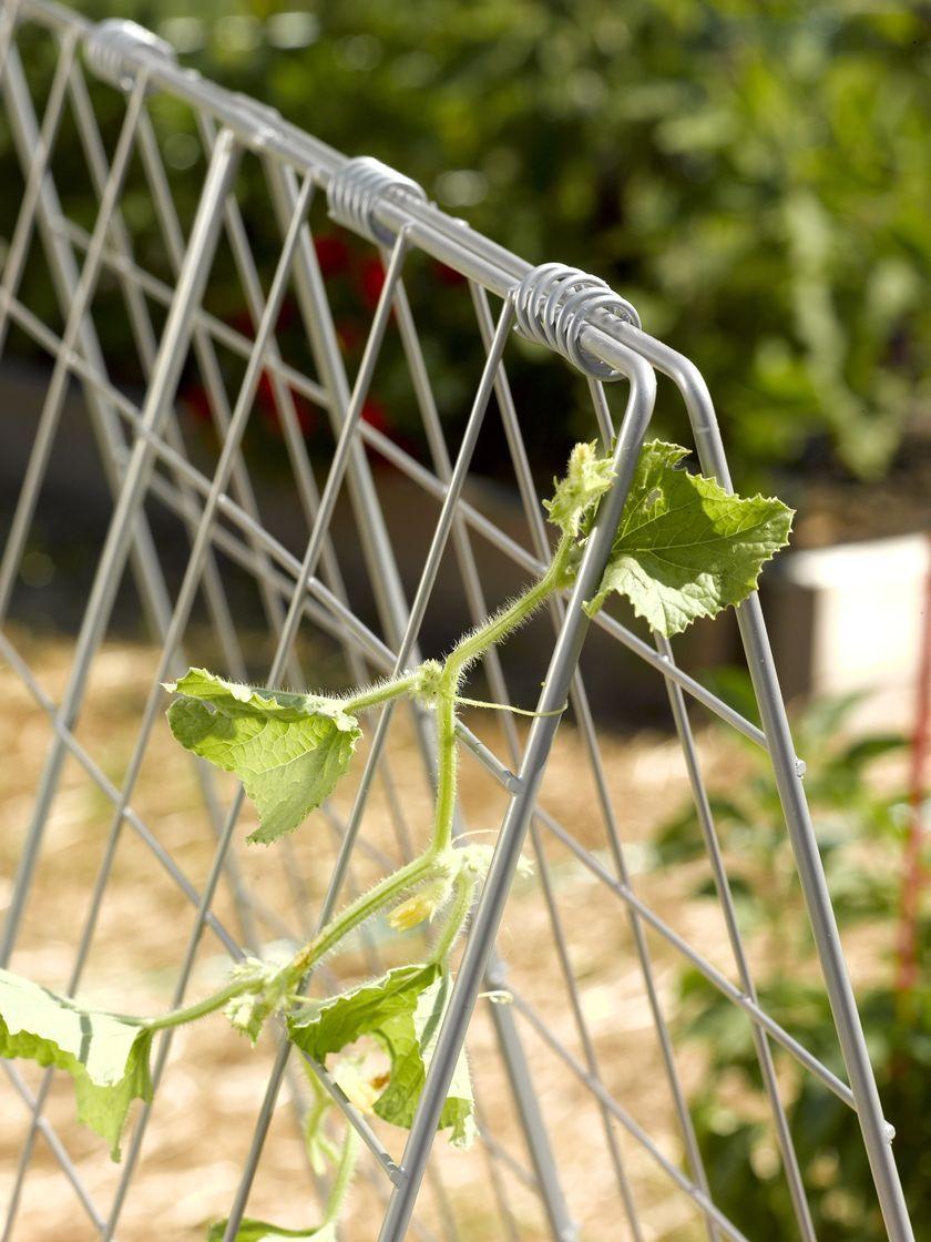 Deluxe Cucumber Trellis Gardener S Supply Cucumber Trellis