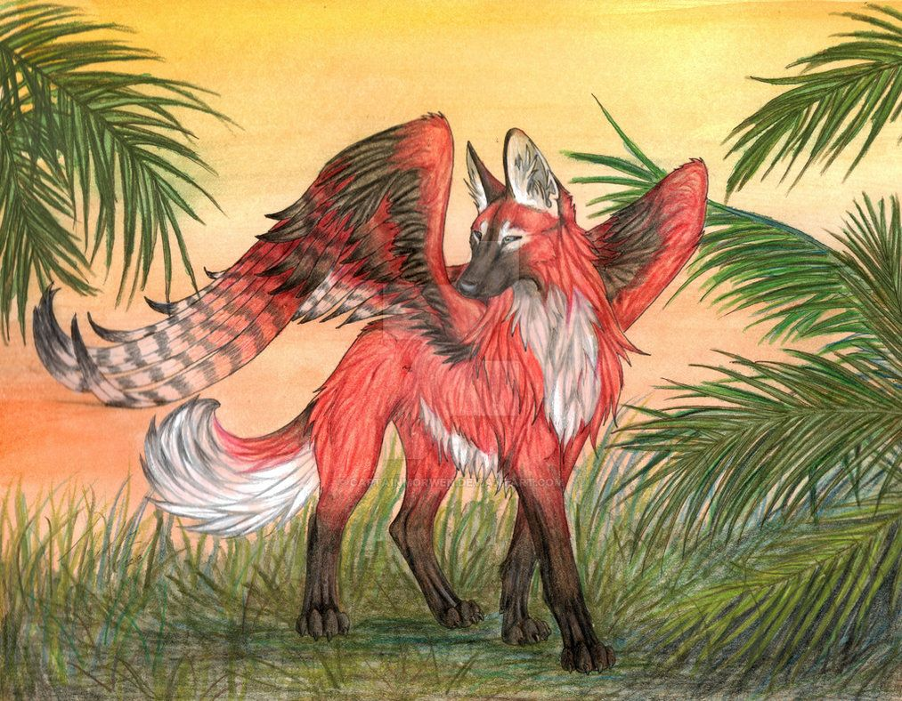 Winged Maned Wolf Color Maned Wolf Wolf Colors Animal Drawings