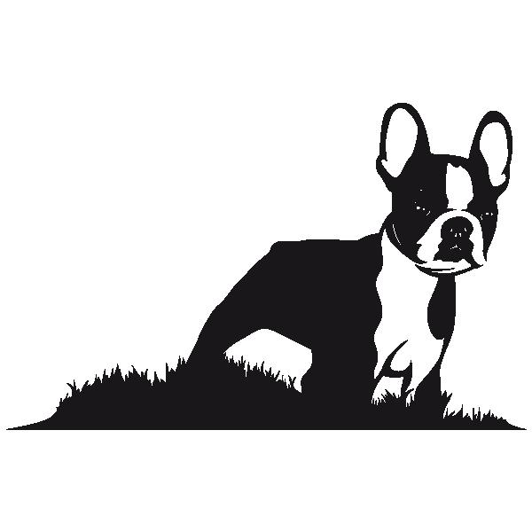 Sticker Boston Terrier Boston Terrier Tattoo Boston Terrier Illustration Boston Terrier Art