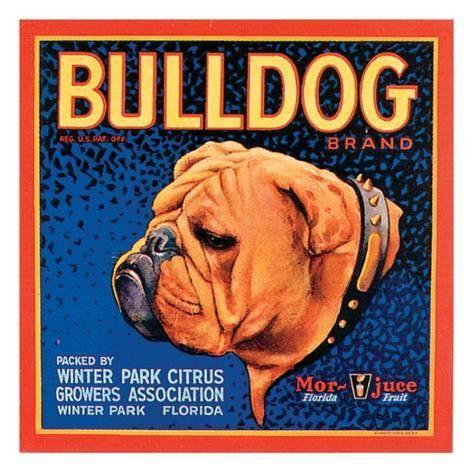 Art Print Bull Dog By Vision Studio 16x16in Orange Crate