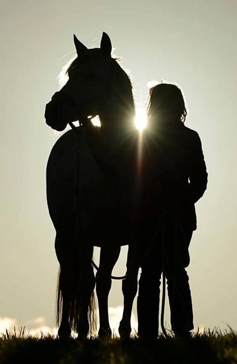 Pferd und Mensch bei Sonnenuntergang.