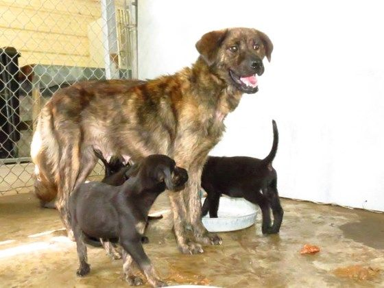 Lacey and 4 puppies saved! Pup