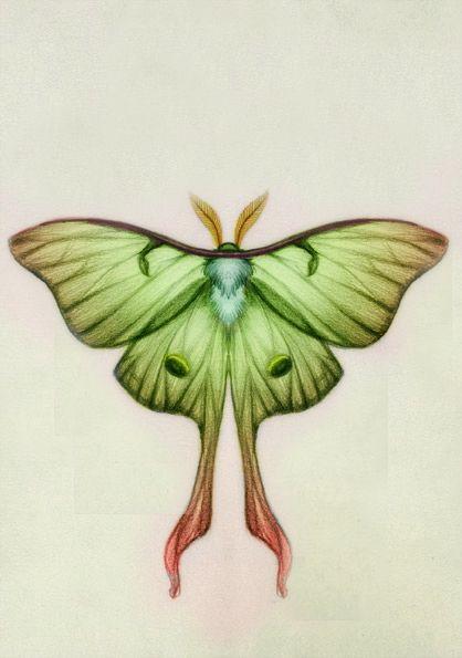 927db6da3 Lunar Moth | Tattoos | Lunar moth, Lunar moth tattoo, Moth tattoo
