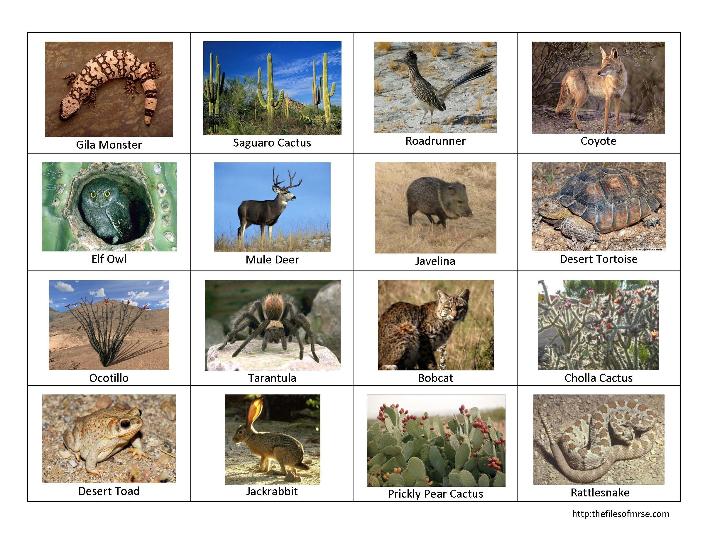 desert animals The Files of Mrs. E Desert animals and