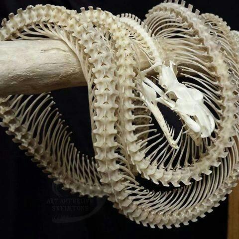 Pin de 黒焦げ茶 en ホームアイデア | Pinterest | Serpientes y Animales