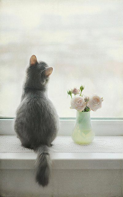 longing for spring.. (by Vooky4U on Flickr)