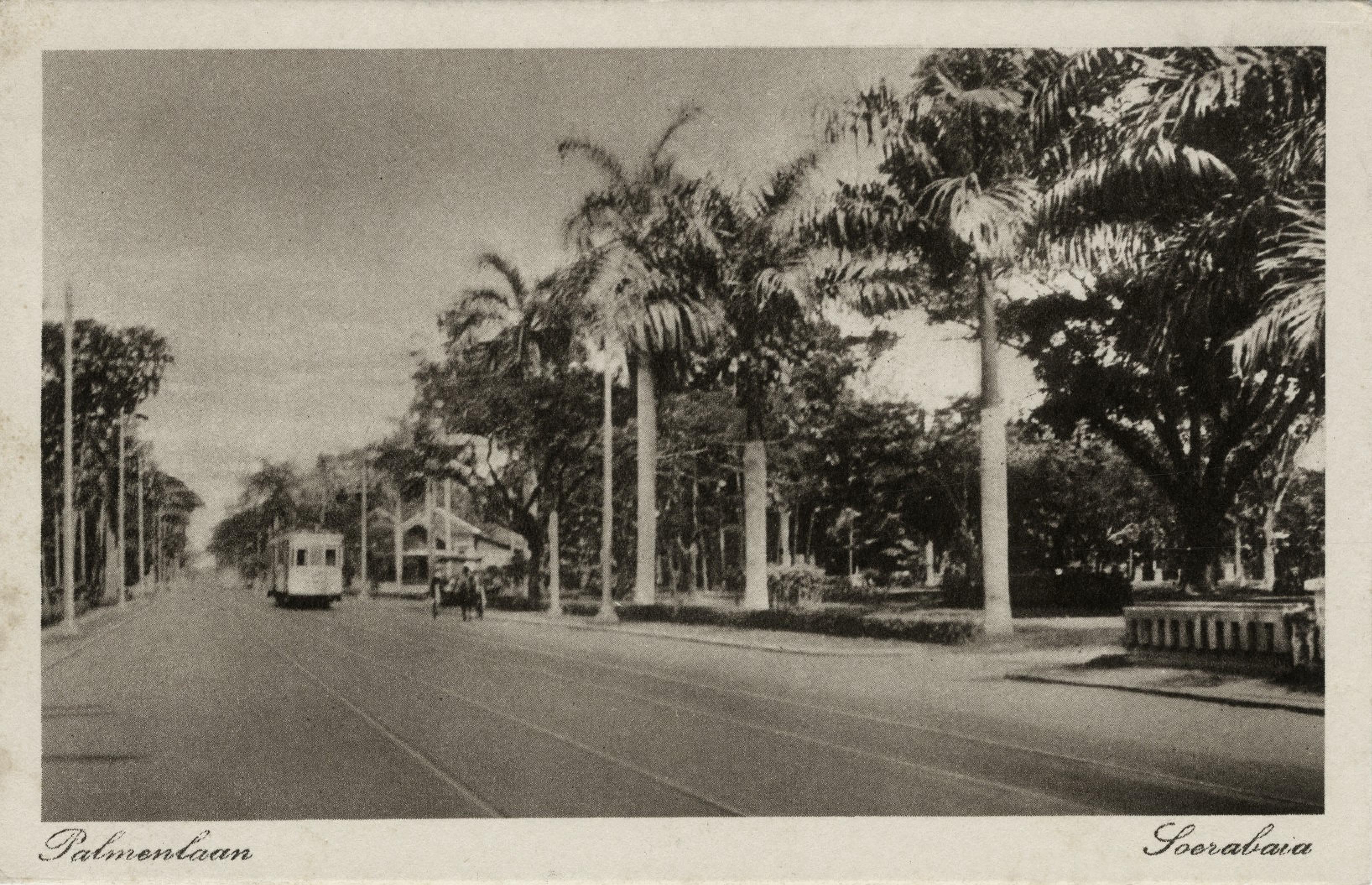 Palmenlaan Soerabaja Ca 1910 Sejarah Belanda Indonesia
