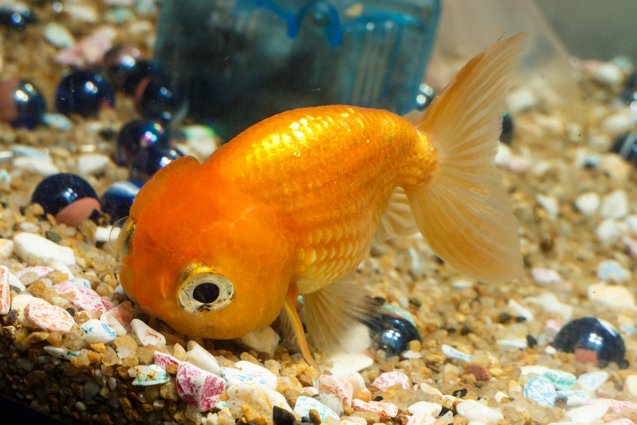 Top 5 Freshwater Fish Types That Can Live In A Bowl Small Aquarium