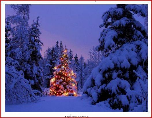 light brite christmas lights on trees outside