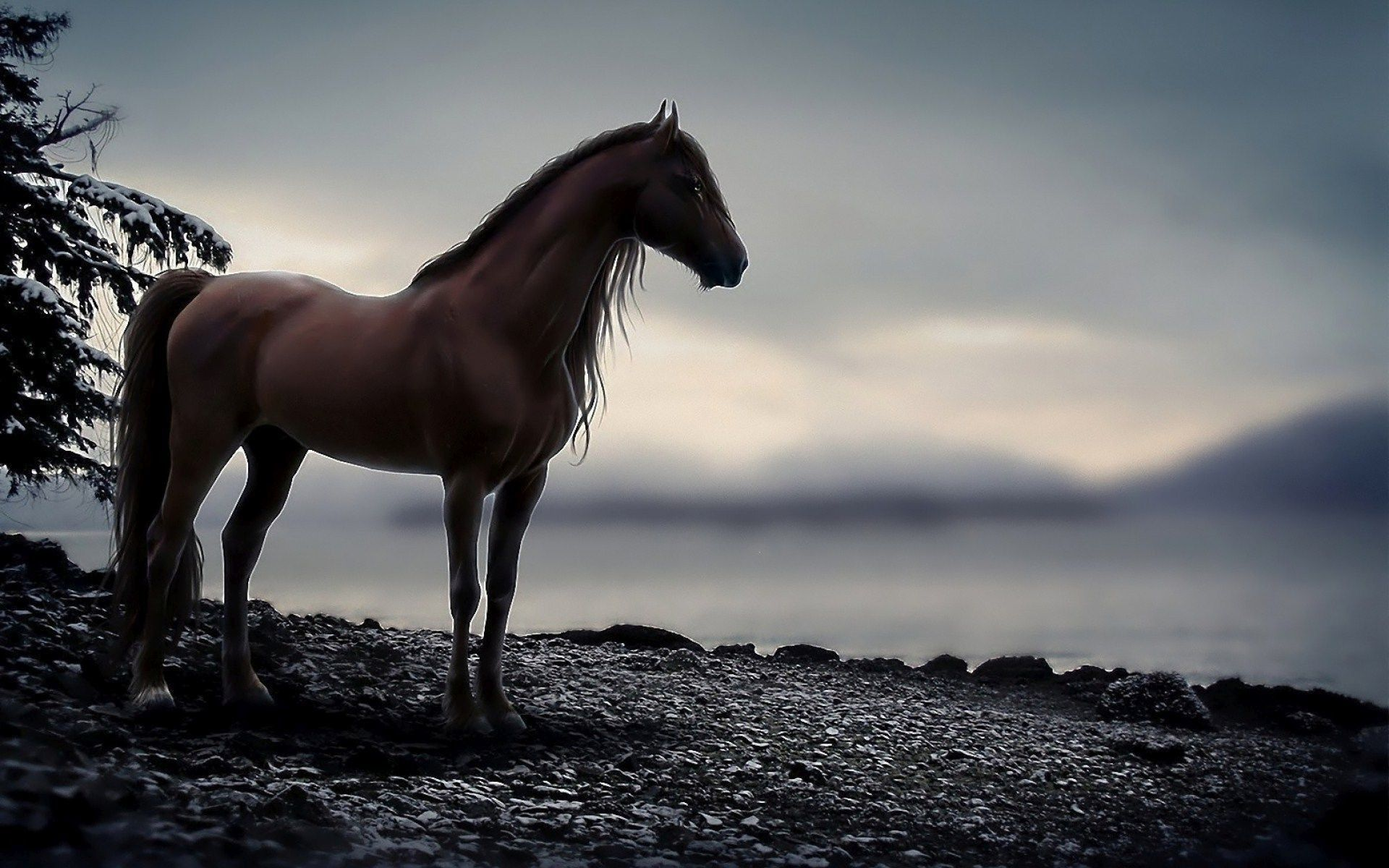 4k Ipad Pro Wallpapers Group 55 Download For Free Horse Wallpaper Horses Horse Background