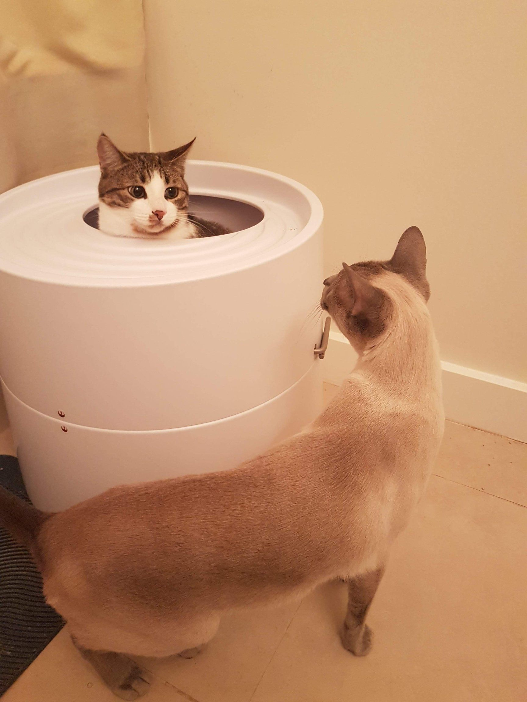 Imagine A Litter Box That Cleaned Faster Than An Automatic Litter Box And We Mean Completely Including The Stuck On Stuff Imagine I Litter Box Automatic Litter Box Top Entry Litter